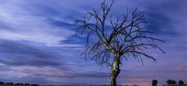 Los árboles mueren de pie, de Alejandro Casona