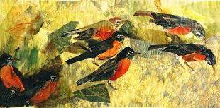 Aves sin nido